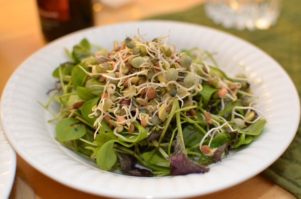 Mixed green salad with lentil sprouts